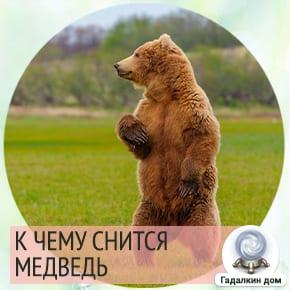 Медведь - это сильный и надёжный мужчина.
