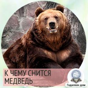 Если во сне перед вами предстал медведь, то вы достаточно неосмотрительны.
