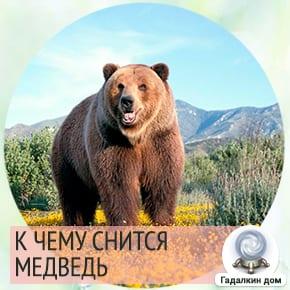 Если девушке приснилось, что она стала медведицей, то её партнёр лжец и изменник.
