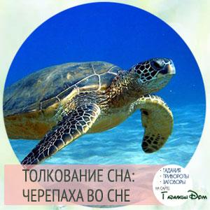 видеть черепаху во сне