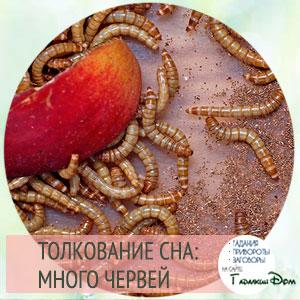 сонник черви
