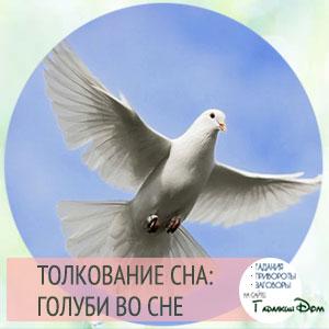 видеть голубя во сне