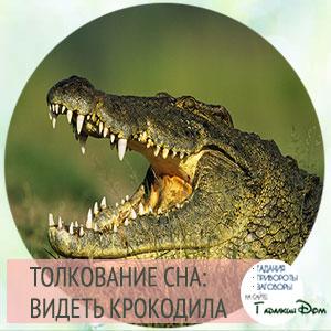видеть во сне крокодила