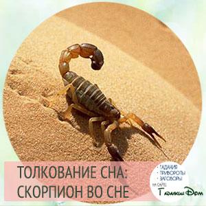 видеть скорпиона во сне