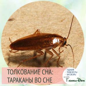 сонник таракан