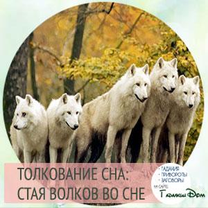видеть волков во сне