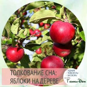сонник яблоки на дереве