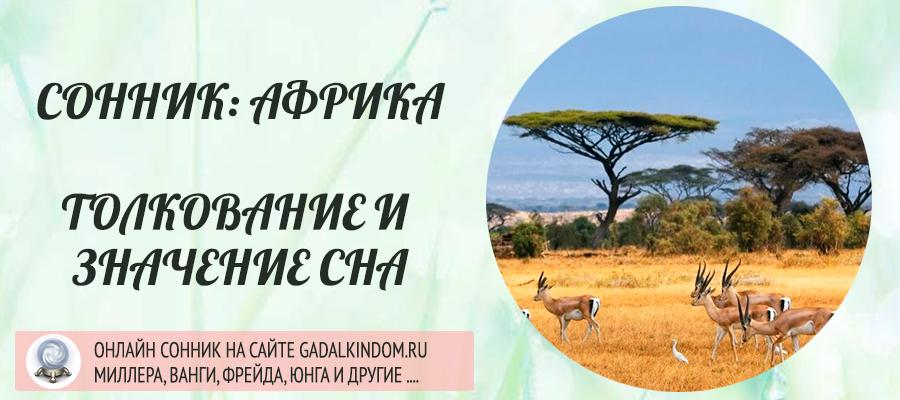 сонник Африка