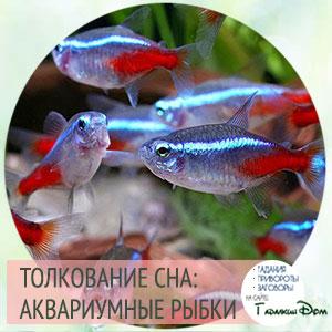 видеть аквариумных рыбок во сне