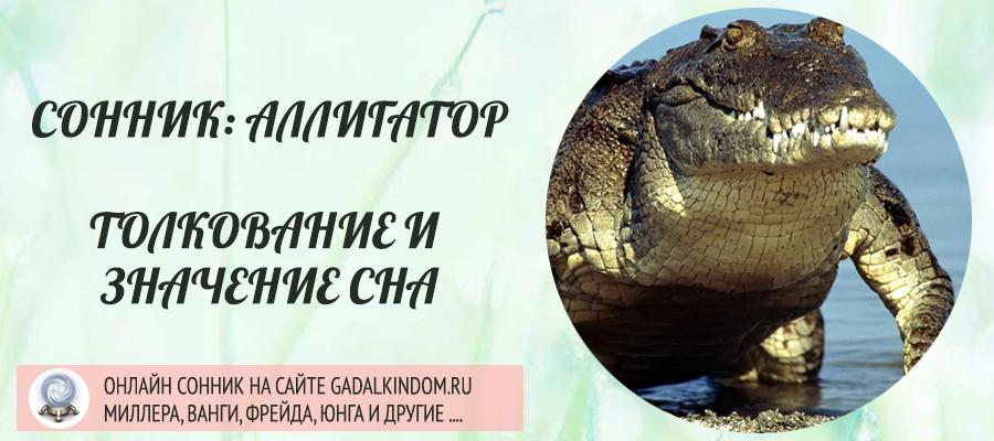 сонник аллигатор