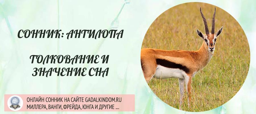 сонник антилопа