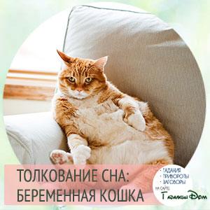 видеть во сне беременную кошку