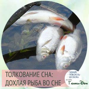 сонник дохлая рыба во сне