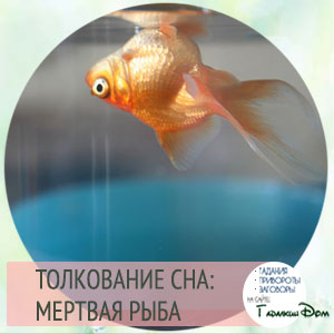 сонник мертвая рыба во сне