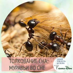 сонник муравьи во сне