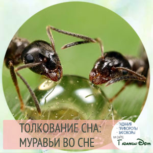 видеть муравьев во сне к чему это