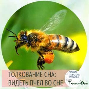 видеть пчел во сне