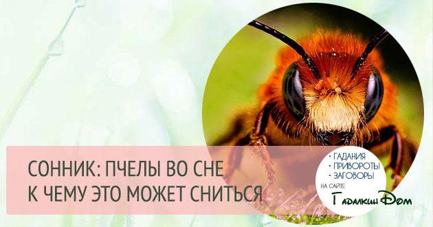 к чему снятся пчелы