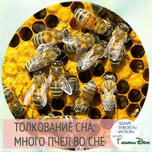 сонник много пчел во сне