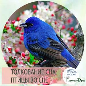сонник видеть птиц во сне