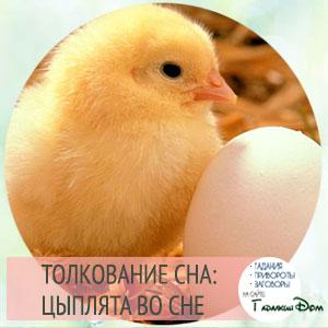 сонник курица с цыплятами во сне
