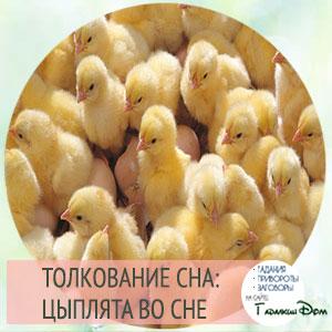 видеть во сне желтых цыплят