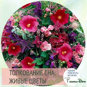 видеть живые цветы во сне