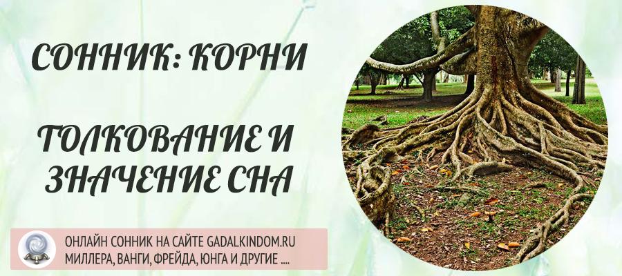 Сонник корни
