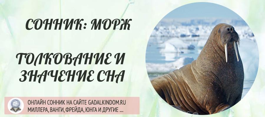 Сонник морж