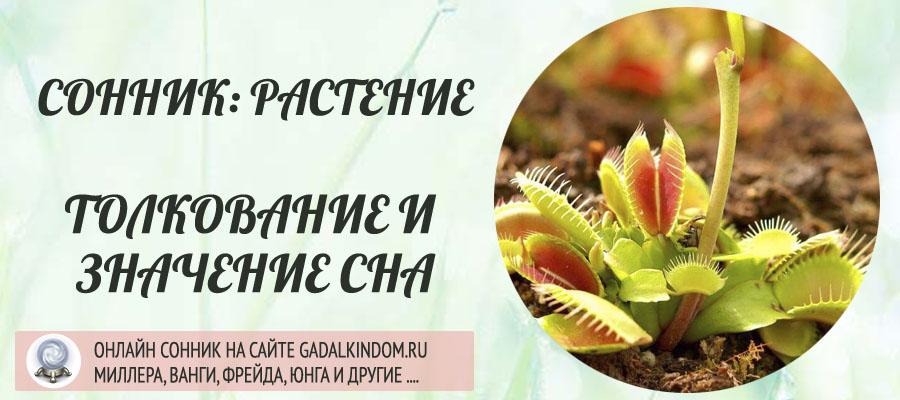 Сонник растение