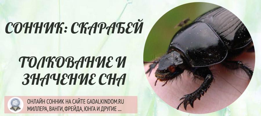 Сонник скарабей