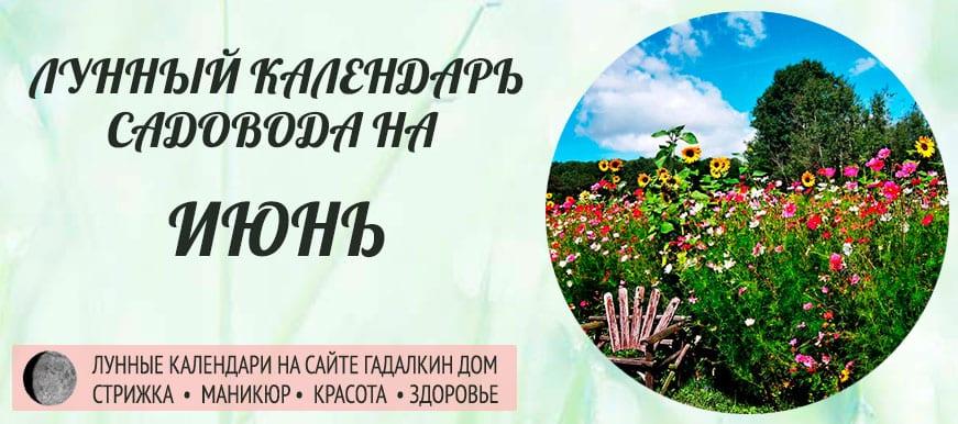 Лунный календарь ухода за растениями для садовода и огородника в июне 2020 года - оракул благоприятных дней.