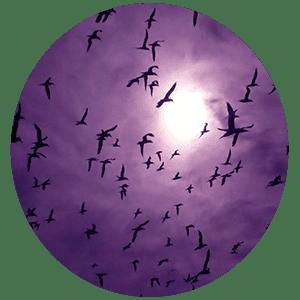 Гадание на птицах