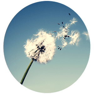 Гадание Ветер перемен