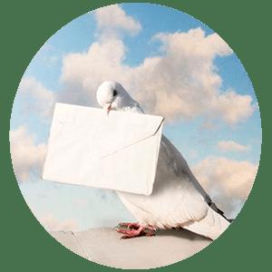 Гадание Почтовая голубка
