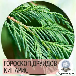 гороскоп друидов кипарис