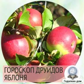 гороскоп друидов яблоня