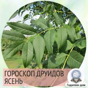 Гороскоп друидов Ясень.