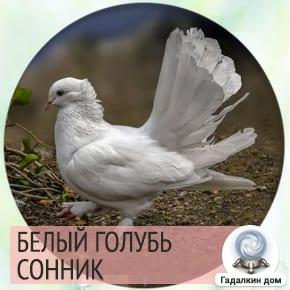 сонник: белый голубь