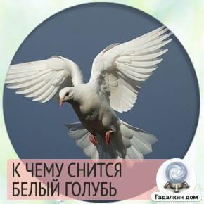 сонник белые голуби