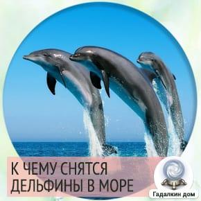 к чему снятся дельфины в море
