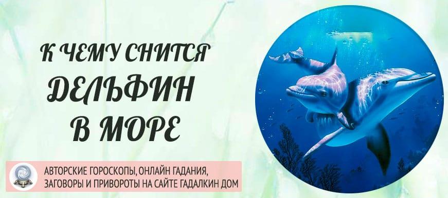 К чему снится Дельфин в море