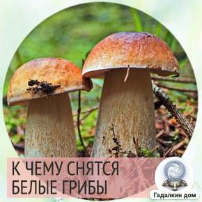 видеть во сне грибы белые