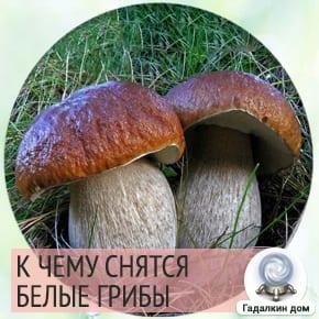 Сонник: Белые грибы