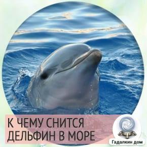 Сонник: дельфин в море