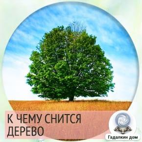 к чему снятся деревья