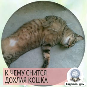 Сонник: дохлая кошка