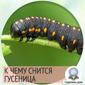 Сонник: гусеница