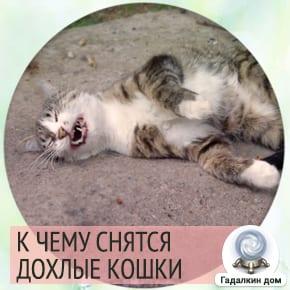 к чему снится мёртвая кошка