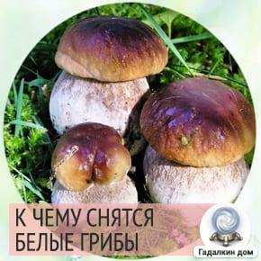 сонник белые грибы